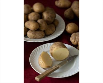 Potatoes of Rotzo
